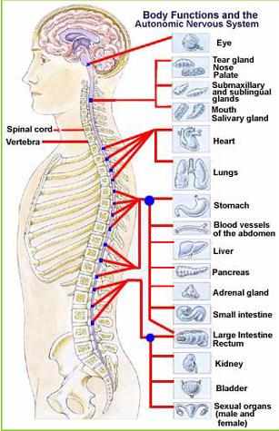 chiropractors in jamaica